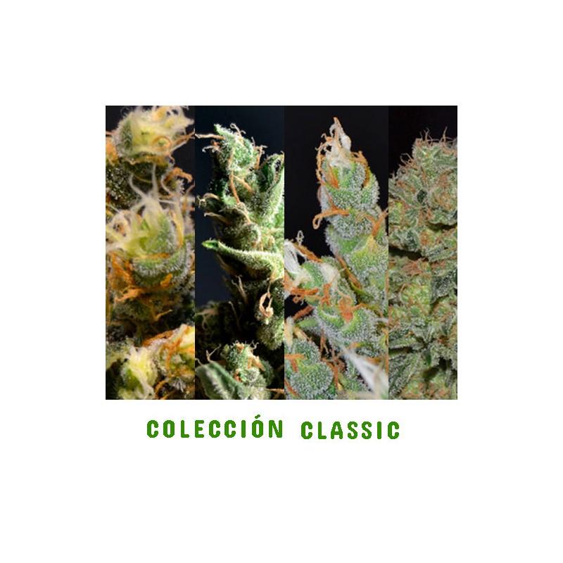 COLECCIÓN CLASSIC