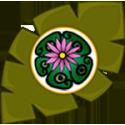 Cactus (Peyotes)